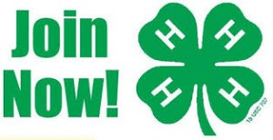 Join Now 4-H